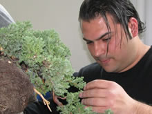 UBI Bonsai Talento Italiano